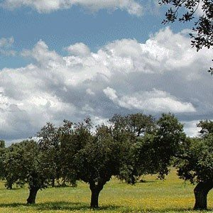 Alojamiento rural para 4 - Córdoba