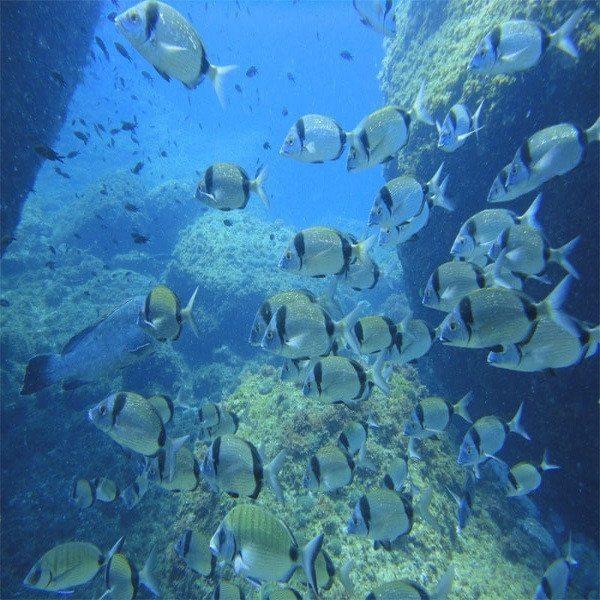 Bautizo de buceo en el mar - Girona