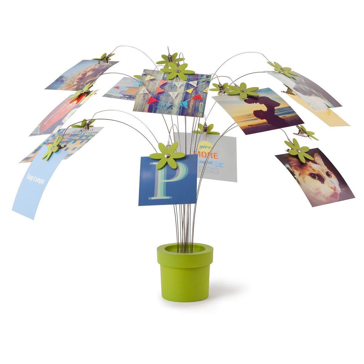 Blüten Fotopflanze