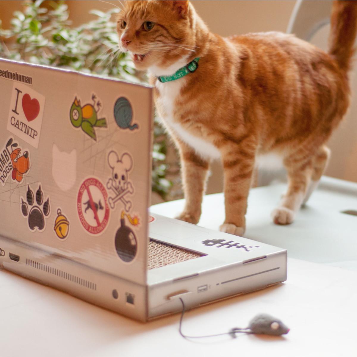 Cattop – Laptop-Kratzbaum für die Katz