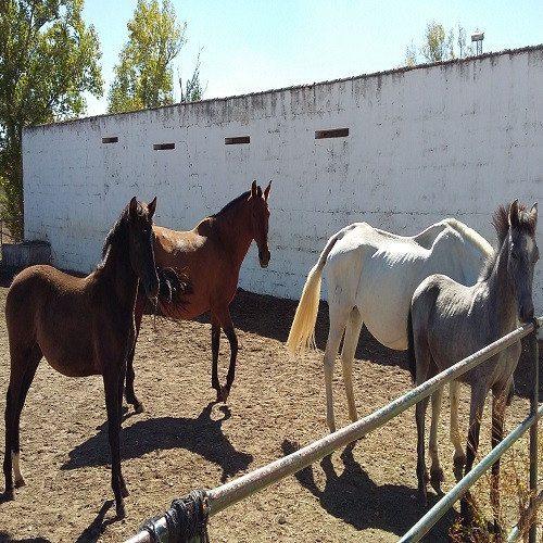 Clase de equitación - Salamanca