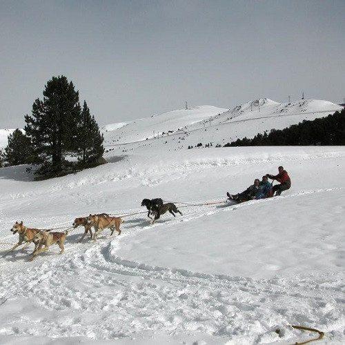 """Conduce un trineo -""""Mushing"""" en los Pirineos"""