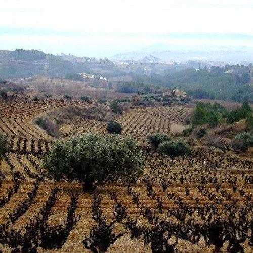 Curso de viticultura, cata y enología con Calçotada - Barcelona