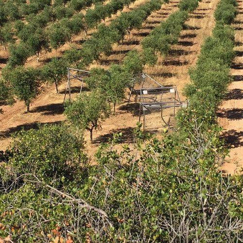 Desayuno tradicional y cata de vinos y aceites para 2 - Lleida