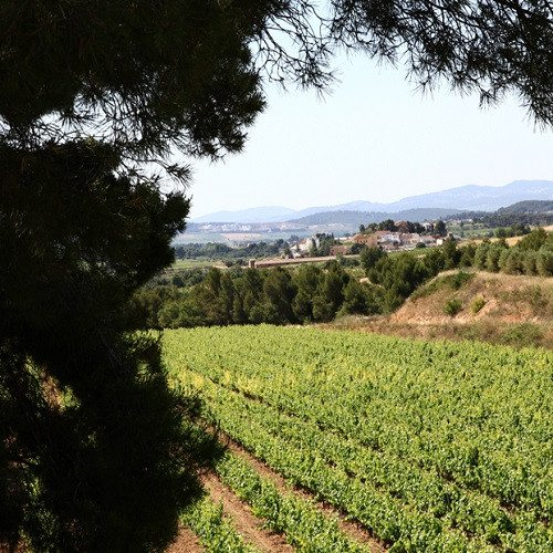 Escapada bio-enológica fin de semana - Barcelona