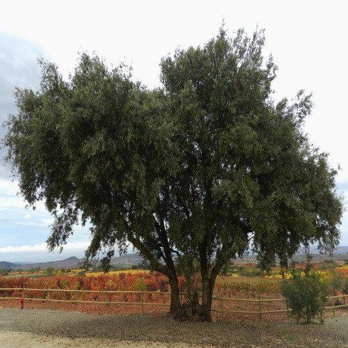 Escapada Enológica Delux en Finca los Arandinos - La Rioja