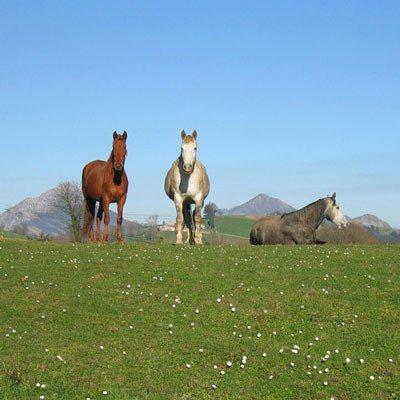 Escapada rural con ruta a caballo por Sorribas - Asturias