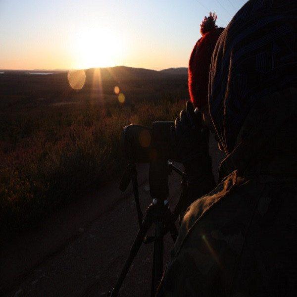 Fauna y lobos con noche en Sierra de la Culebra - Zamora