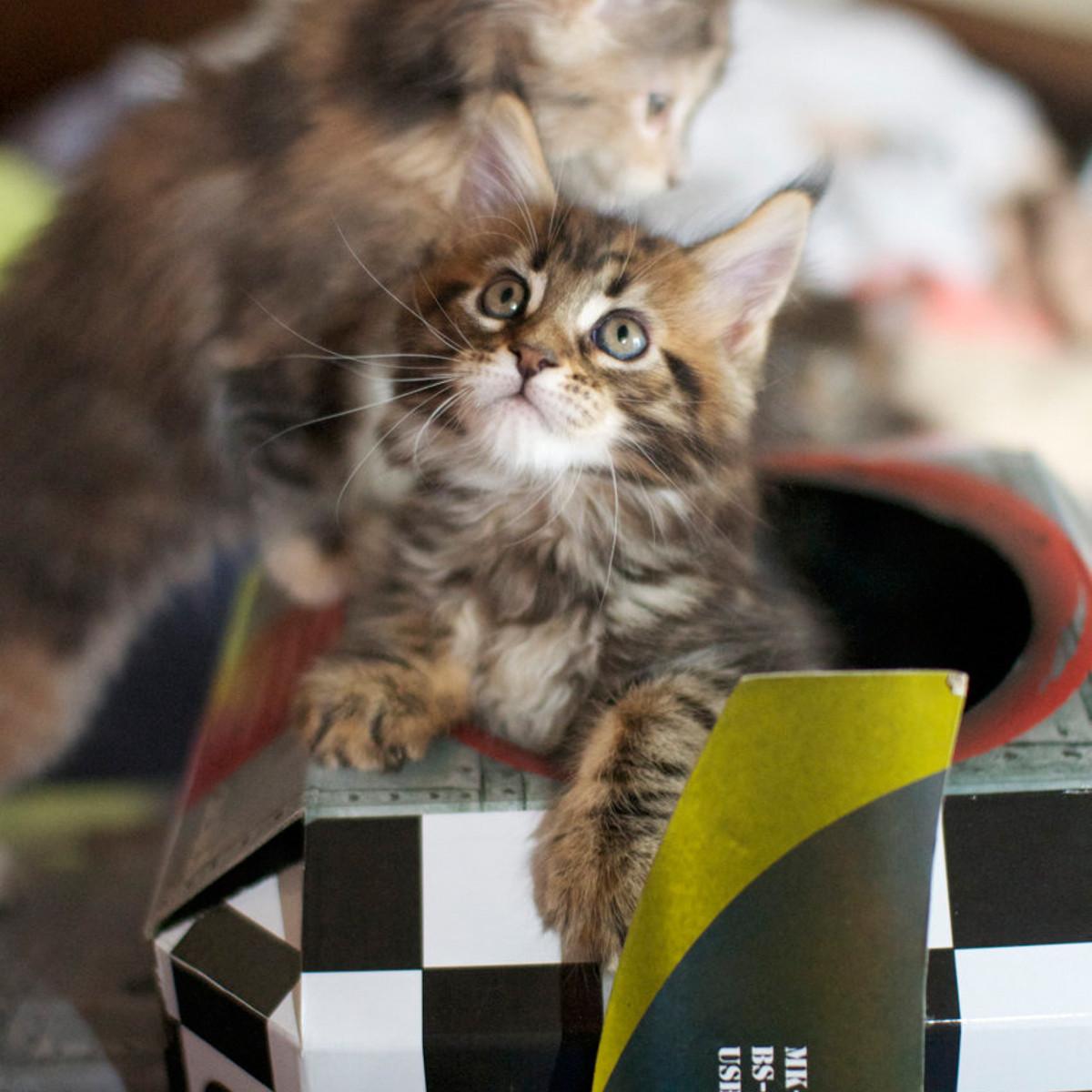 Katzen-Spielhaus