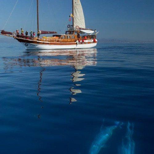 Navegación y Snorkel - Murcia