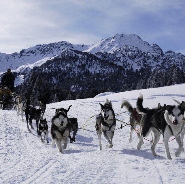 Paseo en Mushing por los Pirineos - Andorra