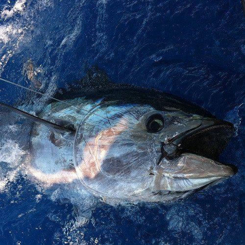 Pesca de fondo - Mallorca