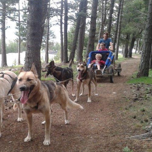 Ruta Mushing de verano en Vallnord - Andorra