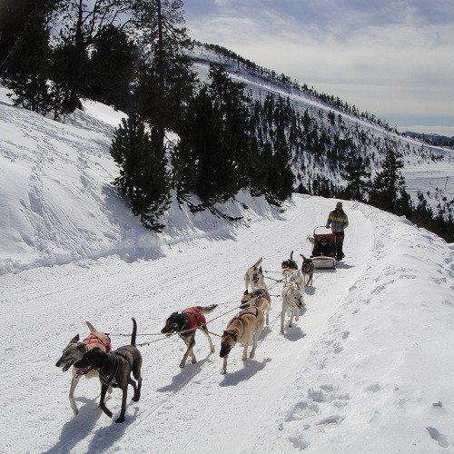 Ruta Mushing para niños por Vallnord - Andorra