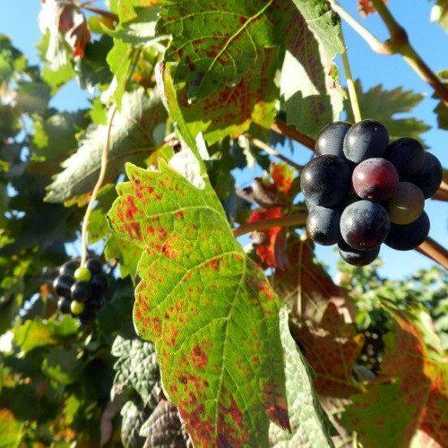 Spa, paseo a caballo entre viñedos y cena - La Rioja