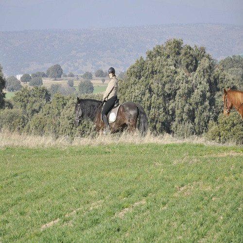 Una ruta a caballo de una hora - Madrid