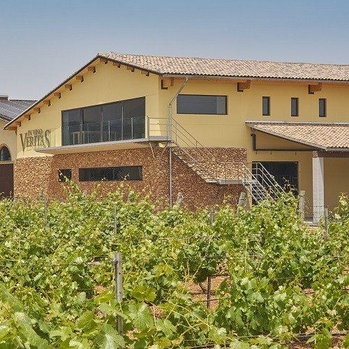 Visita a Bodega con cata de 3 vinos y ´´picada´´ - Mallorca