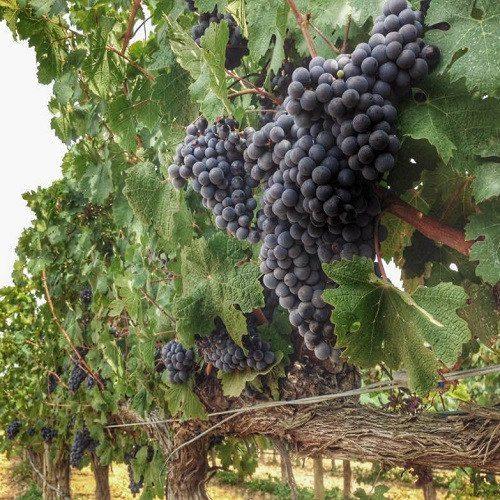 Visita a Bodega con Cata de Vino y Cava - Barcelona
