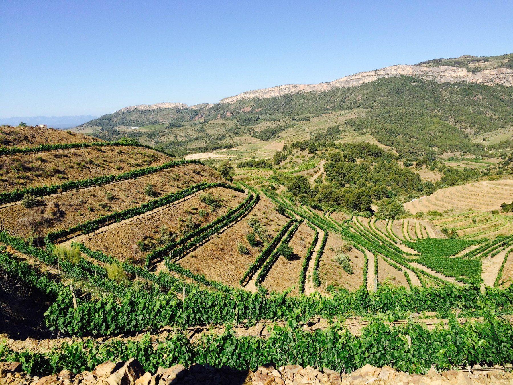 Visita a bodega y cata de vinos - Tarragona