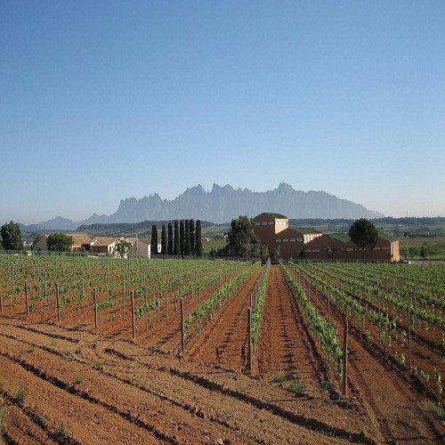 Visita a bodegas y cata de vinos - Barcelona