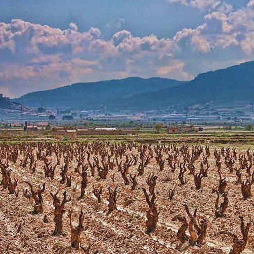Visita enológica con cata de Fondillón - Alicante