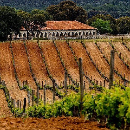 Visita Vitivinícola - Burgos
