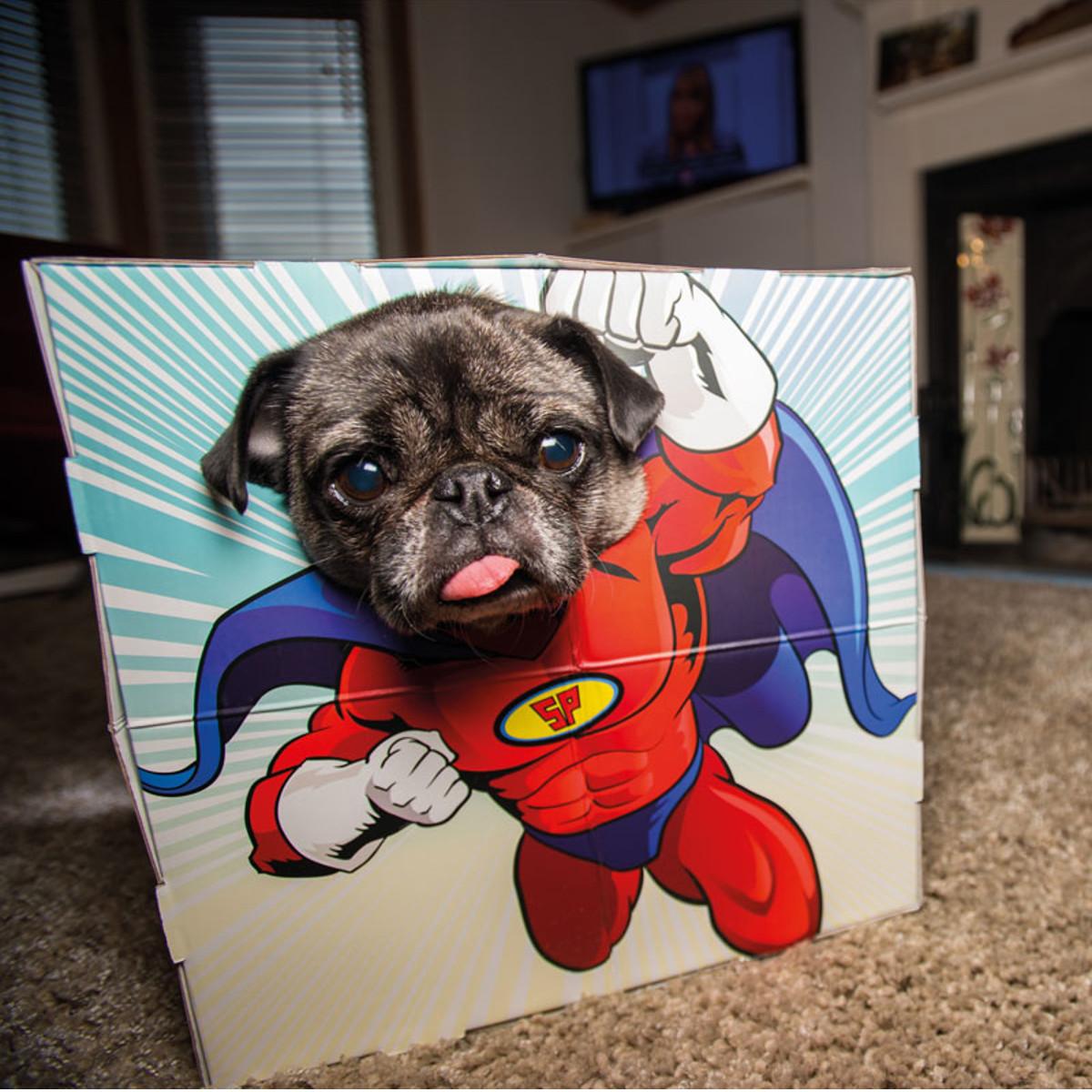 PhotoBooth Mascotas