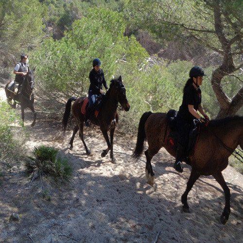 Clase de hípica y excursión a Patrimonio de España - Mallorca