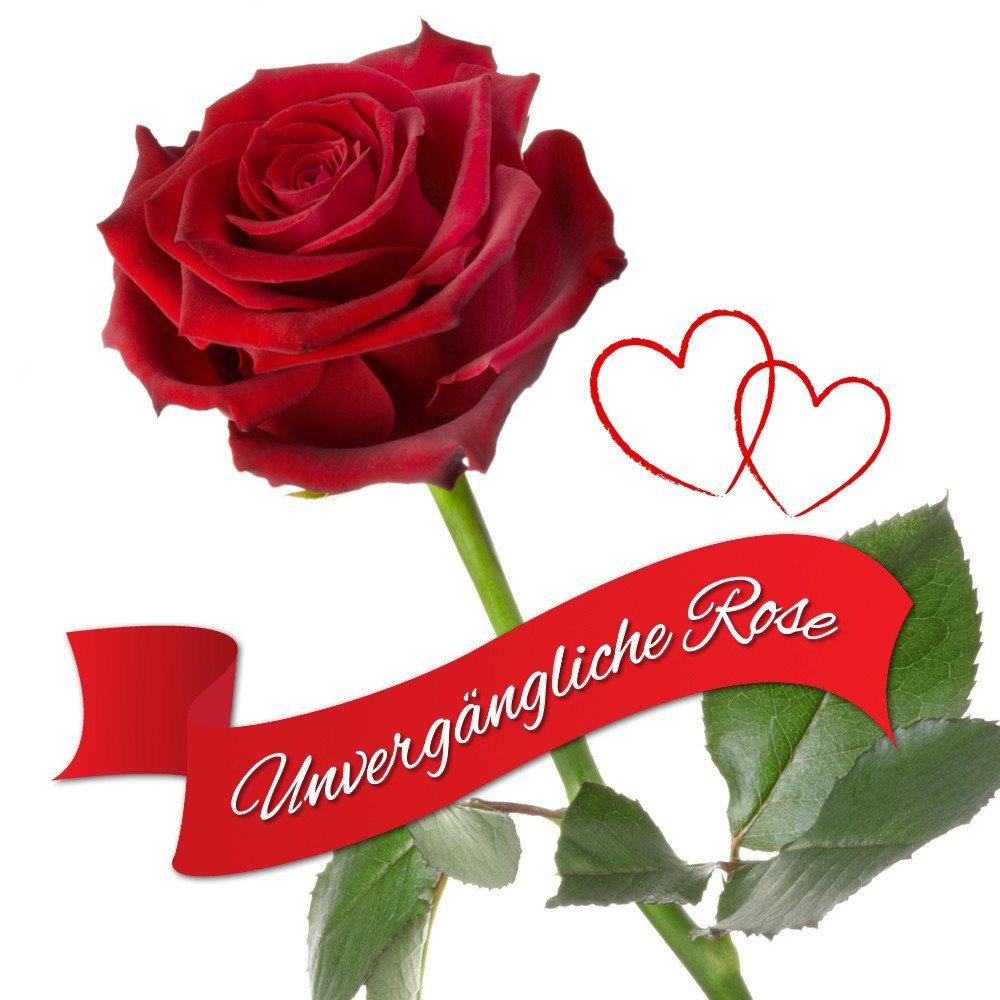 Rosa eterna - Una rosa real que nunca se marchita