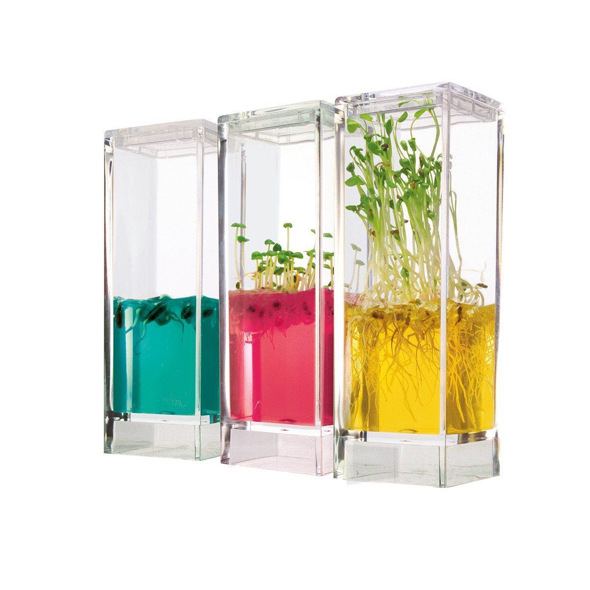 Laboratorio de plantas con gel nutritivo