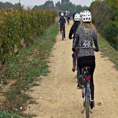 Ruta libre en bici con curso de viticultura, enología y cata - Barcelona