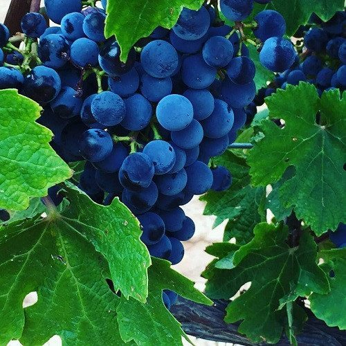 Visita a bodega con cata de vinos y aceite para 2 - Lleida