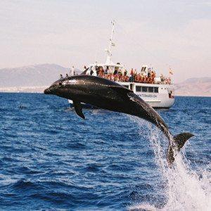 Avistamiento de Cetáceos - Cádiz