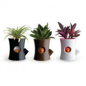 Macetas con ardilla que te ayuda a cuidar de tus plantas