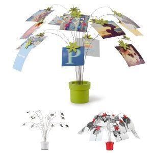 Planta de fotos