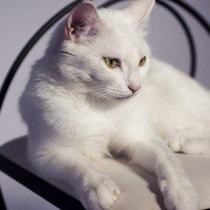Book de fotos para mascotas - Badajoz
