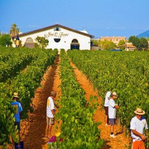 Cata de 3 vinos y degustación de productos locales - Mallorca