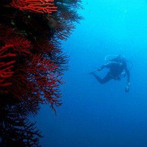Curso de submarinismo Open Water Diver - Girona