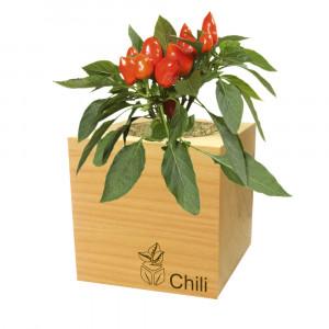 EcoCube - Pflanzen in Holzwürfeln