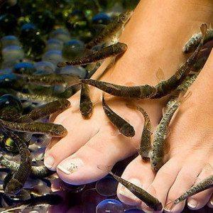 Fish Pedicure de Lujo para dos - Logroño