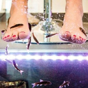 "Fish pedicure ""Sex and the city"" - Castellón"