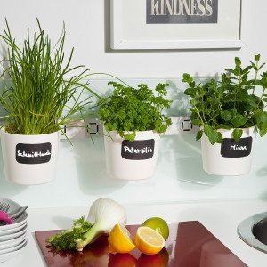 Kräuter-und Pflanzenleiter