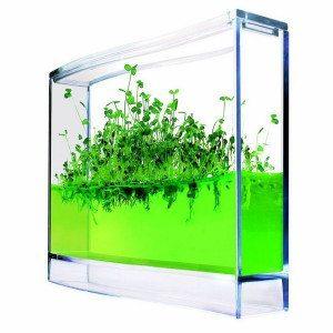 Plantarium à gel