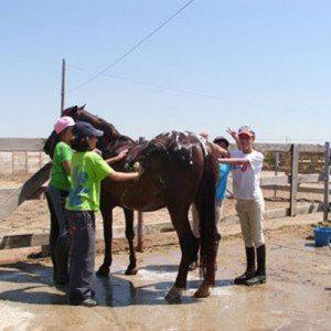 Primera experiencia a caballo para niños - Salamanca