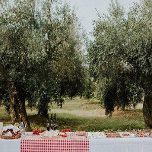 Visita a viñedos y bodegas con picnic entre viñas - Gerona