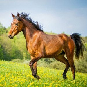 Ruta a caballo por Sorribas para dos personas - Asturias