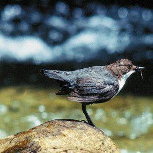 Ruta a la Reserva de Aves de las Láguas del Oso - Ávila