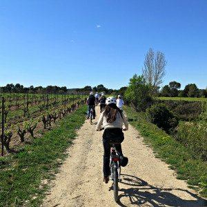 Ruta en bicicleta por los viñedos del Penedés - Barcelona