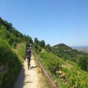 Ruta enológica en bici con visita a bodega y cata - Barcelona