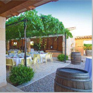 """Visita a Bodega con cata de 3 vinos y """"picada""""- Mallorca"""